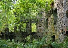 Le rovine del mulino degli staups con gli alberi e le felci di estate Fotografia Stock Libera da Diritti