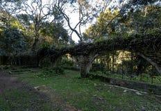 Le rovine di vecchia casa a Salto Ventoso parcheggiano - Farroupilha, Rio Grande do Sul, Brasile Immagini Stock Libere da Diritti