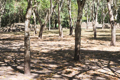 Le rovine maya di Las Sepulturas vicino a Copan Immagine Stock Libera da Diritti