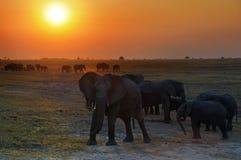 Le royaume d'éléphants Images libres de droits