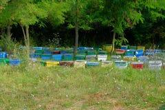 Le rucher Photo libre de droits