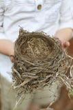 Le ` s d'enfant remet tenir le nid tombé du ` s d'oiseau Images libres de droits