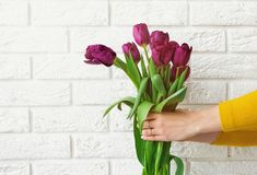 Le ` s de femme remet tenir des tulipes sur le fond de mur de briques Images stock
