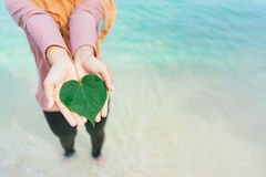 Le ` s de femme remet tenir une forme de coeur des feuilles vertes Images stock