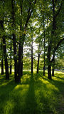 Le ` s du soleil rayonne par le feuillage des arbres, lumineux pendant le matin images libres de droits