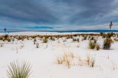 Le sabbie bianche surreali stupefacenti del New Mexico con le piante e le nuvole Fotografia Stock