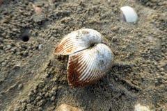 Le sable a couvert le coquillage Image libre de droits