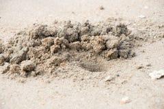 Le sable de crabe creusé  Images libres de droits