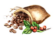 Le sac de grains de café et le café vert s'embranchent Illustration tirée par la main d'aquarelle, d'isolement sur le fond blanc illustration stock