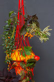 Le sac rouge de maille rempli avec différents genres de potirons a décoré des branches d'automne, vacances, milieux Photos stock