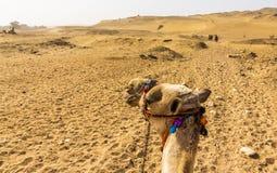 Le Sahara comme vu par un cavalier de chameau Photos stock