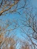 Le sang bleu et les veines sèches photographie stock