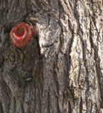 Le sang a fait pour couper des branches en place. Images libres de droits