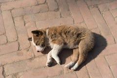 Le sans-abri abandonné poursuivent le sommeil sur la rue Photos stock