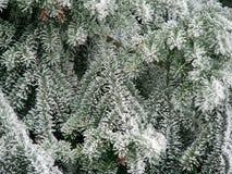 Le sapin a couvert la neige photos libres de droits