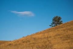 Le sapin sur le fond du ciel bleu Images stock