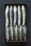 Le sardine hanno imballato strettamente in latta Fotografie Stock