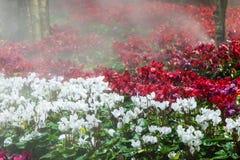 Le sauteur coloré de gisement et d'eau de fleur la nuit font du jardinage Photo stock