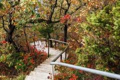 Le scale conducono giù attraverso la foresta immagini stock