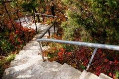 Le scale conducono giù attraverso la foresta fotografia stock