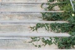 Le scale del cemento bianco hanno coperto la pianta dell'edera delle foglie verdi la pianta alloggia l'idea domestica di progetta Fotografia Stock