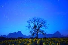 Le scape de terre de nuit de la queue d'étoile sur le ciel bleu-foncé avec la branche d'arbre sèche et les tournesols mettent en  Photographie stock