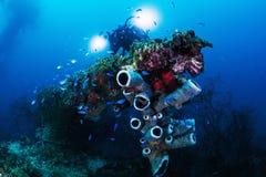 Le scaphandre de plongeur de photographe prennent une photo ou un récif proche visuel d'océan Image libre de droits