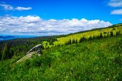 Le scarabée de pin a affecté la forêt dans les montagnes de Shuswap Photos stock