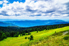 Le scarabée de pin a affecté la forêt dans les montagnes de Shuswap Photo stock