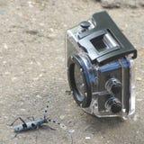 Le scarabée pose devant l'appareil-photo d'action de sport - 1 Images libres de droits