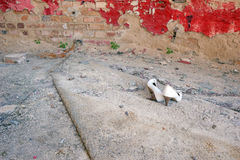 Le scarpe delle alte donne bianche in sabbia Fotografia Stock