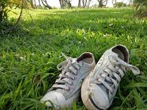 Le scarpe di tatto dell'albero del cielo si rilassano Immagini Stock