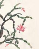 Le Schlumbergera fleurit la peinture d'aquarelle Image stock