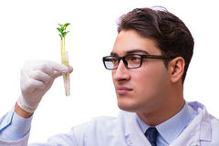 Le scientifique avec la jeune plante verte en verre d'isolement sur le blanc Photographie stock