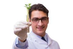 Le scientifique avec la jeune plante verte en verre d'isolement sur le blanc Image stock