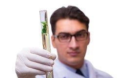 Le scientifique avec la jeune plante verte en verre d'isolement sur le blanc Images libres de droits