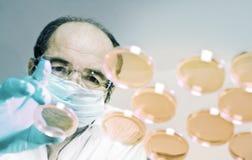 Le scientifique lance des plats de culture cellulaire photographie stock