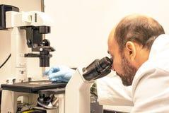 Le scientifique regarde des cellules sous un microscope Photographie stock
