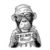 Le scimmie che tengono una tavola con iscrizione FUNZIONERANNO PER ALIMENTO illustrazione di stock