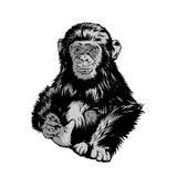 Le scimmie dei bambini di vettore stanno sedendo, per progettare le magliette o il fondo fatto sarà interessante fotografia stock