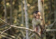 Le scimmie scalano gli alberi/scimmia/famiglia della scimmia Fotografie Stock