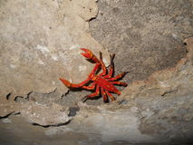 Le scorpion Photographie stock