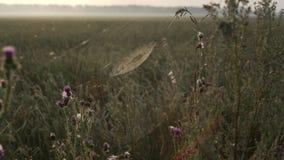 Le scosse della ragnatela su vento ad alba stock footage