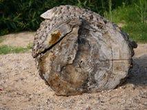 Le segment d'une surface clairement évidente de coupe de tronc d'arbre, comme bois de flottage, échoué, bois déchiré, s'est longt photos libres de droits