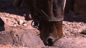 Le sel exsude de la terre entourant le puits attirant l'animal tout près photos stock