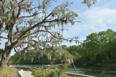 Le sel jaillit la Floride image stock