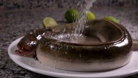 Le sel tombe sur l'anguille crue se trouvant d'un plat blanc clips vidéos