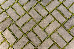 Le sentier piéton en pierre avec de la mousse, se ferment vers le haut de l'image photos stock