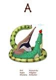 Le serie dell'alfabeto inglese di animali in modo divertente segnano A con lettere 1/26 Fotografia Stock Libera da Diritti