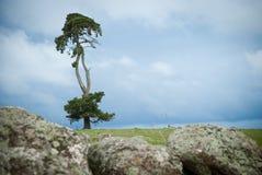 Le seul arbre Images stock